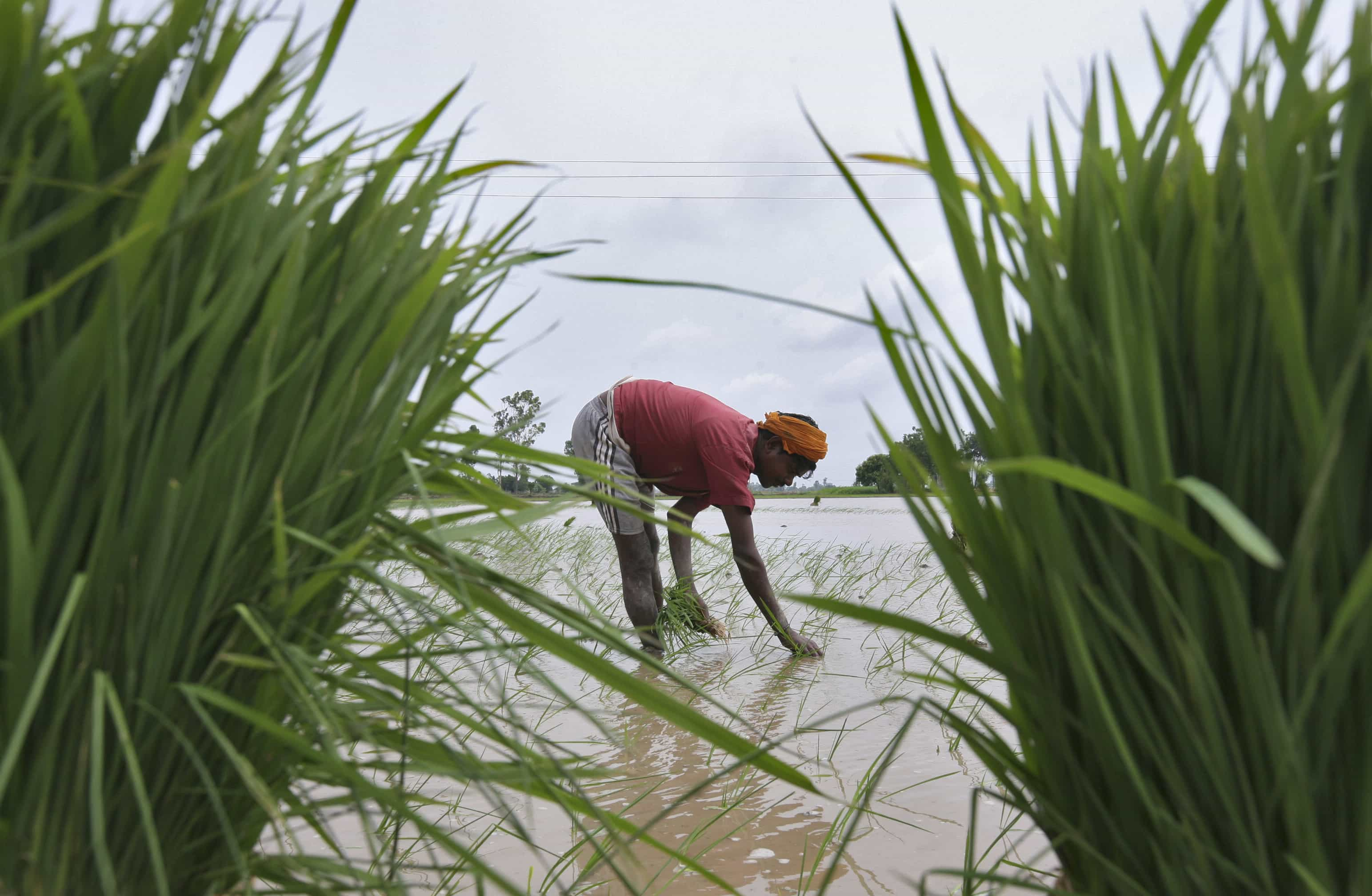 Monsoon Likely To Be Normal This Year Says Imd Zee Business