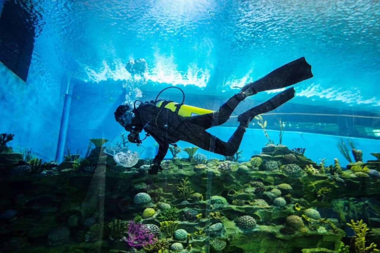 Aquatics Gallery