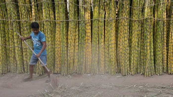 Grub infestation may be the fix to India''s sugar problem its farmers do not want