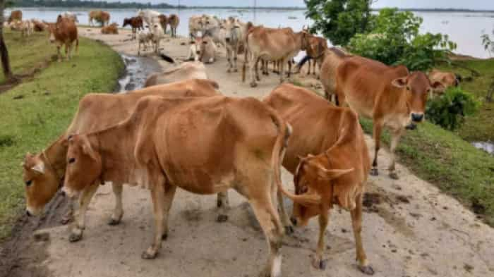 Start your own business: Cow dung becomes a means of employment in Uttar Pradesh