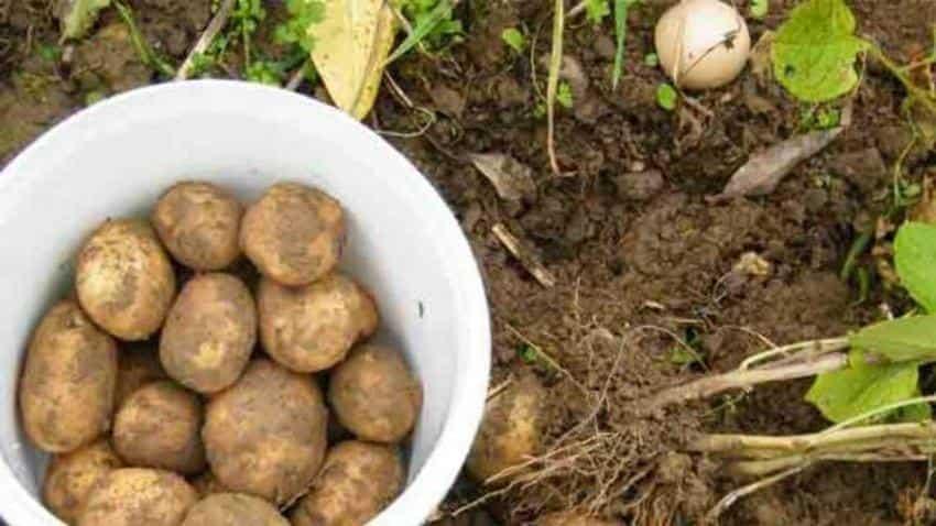 NASA wants to grow potatoes on Mars, tests underway in the Peruvian desert
