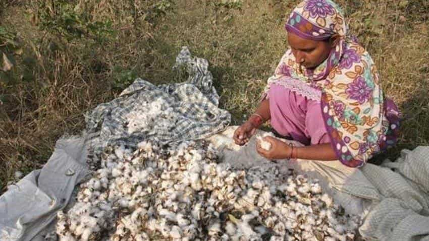 Govt caps royalty fee on new GM cotton traits at 10%