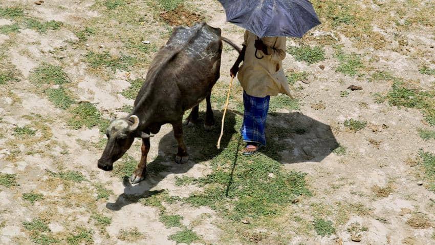 Strongest El Nino in nearly 20 years ends: Australian weather bureau
