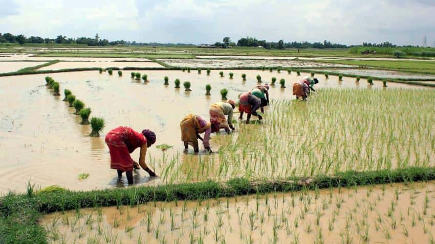 Kharif crop sowing area rises with heavy rainfall during the week