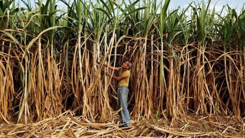 India's sugar production likely to fall to 22 million tonnes in 2016-17 on cane shortage
