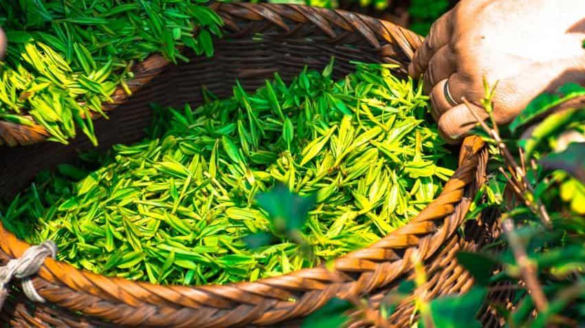 Tata Global Beverages to sell stake in Zhejiang Tata Tea for Rs 33 crore