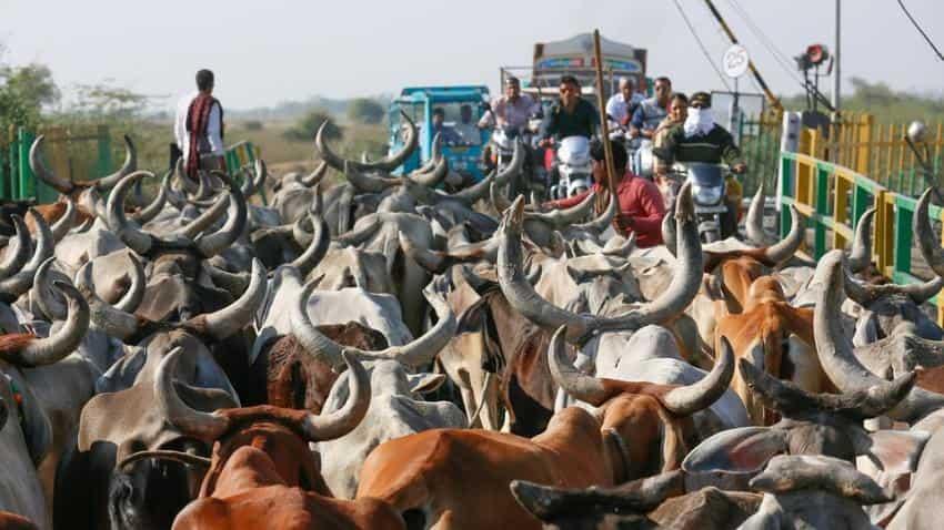 India is world's third-biggest beef exporter: FAO report