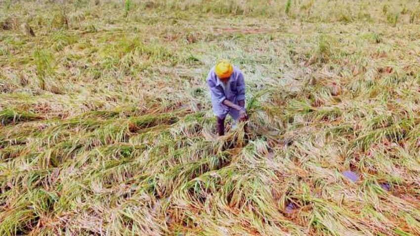 Rabi crops sowing crosses 632 lakh hactare in 2017-18