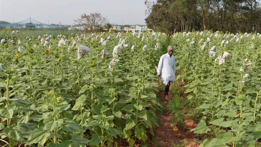 Govt mulling Rs 500cr market assurance scheme to help farmers