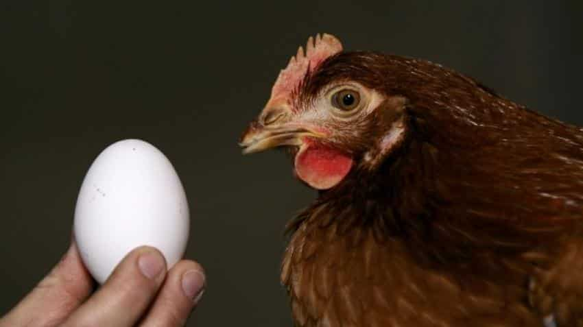 This chicken-and-egg play zoomed 1500% in 3 years; another 100% jump still expected