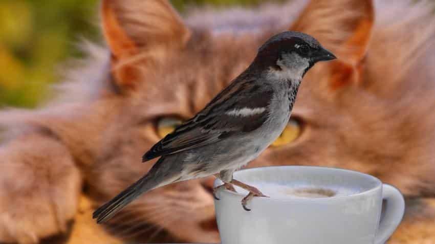 Cat, bird poop coffee, anyone? Cost $3,000 per kg