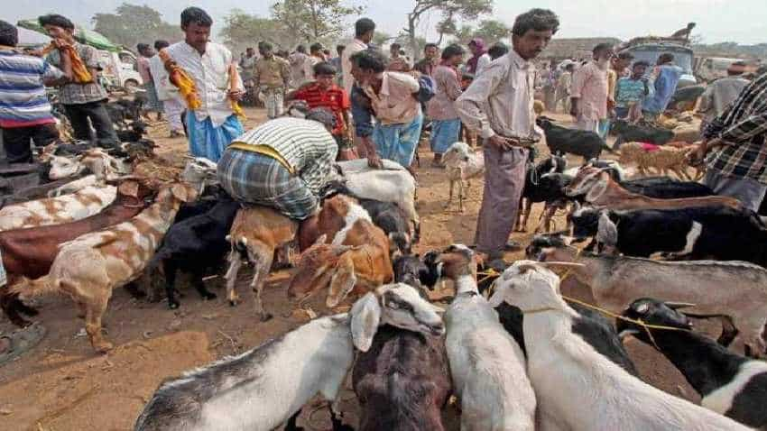 Eid-ul-Zuha 2018: Animal markets bustling in Kashmir Valley ahead of Eid