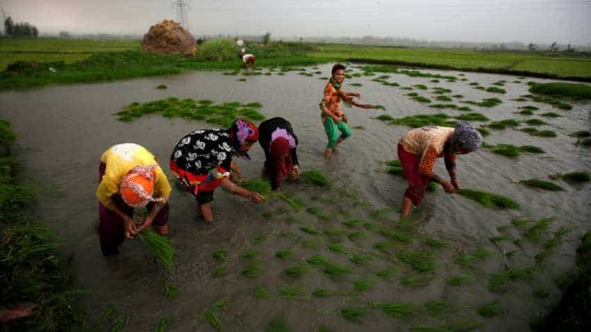 Asia Rice: India rates dip as rupee flounders; markets eye Philippine boost