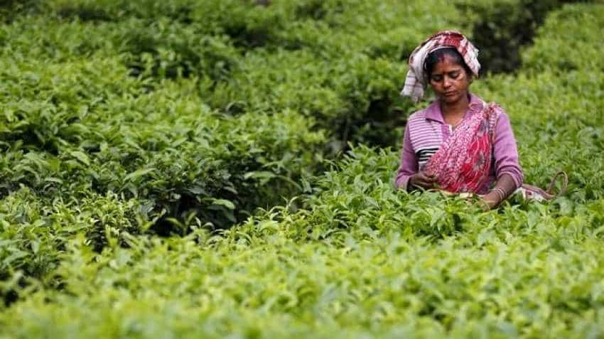 Williamson Magor Group firm McLeod Russel to sell 2 tea estates in Assam to Goodricke Group