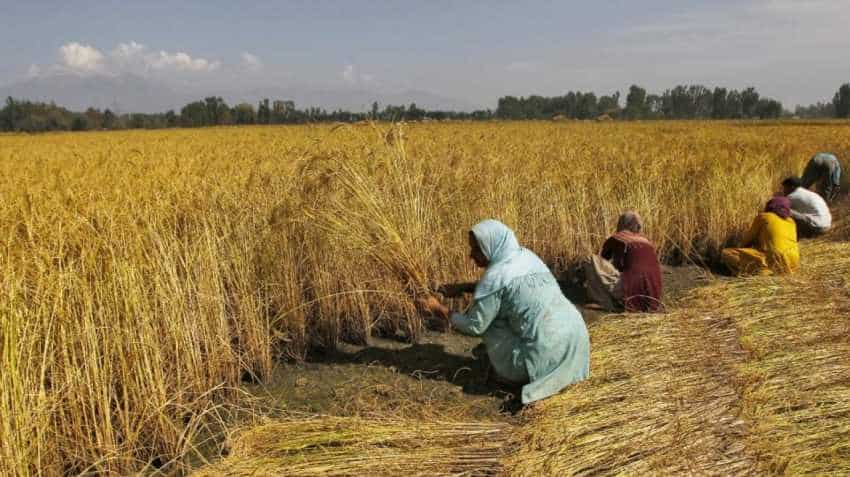 Women in agriculture say barriers to equality persist, removal to take decades: Study