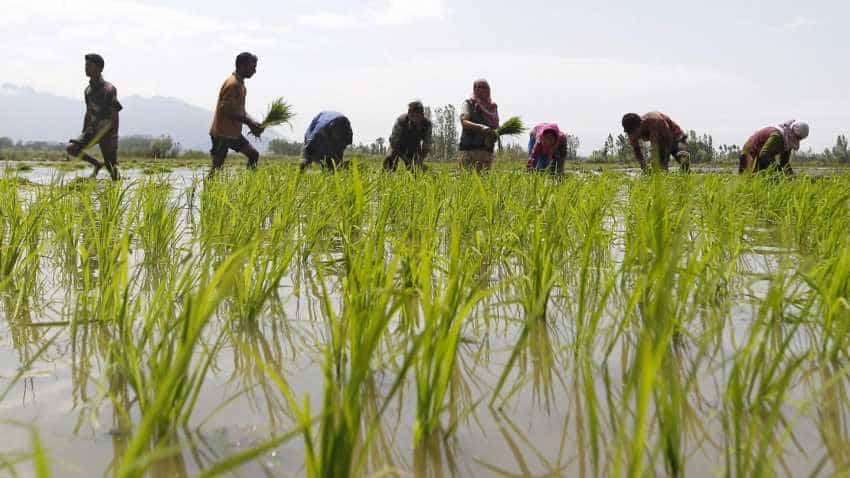 Rabi sowing begins; oilseeds acreage up 70pc so far