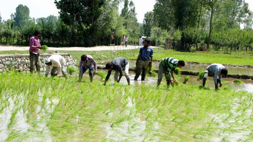 Farm distress: ADB India chief favours direct transfer of funds to targeted beneficiaries