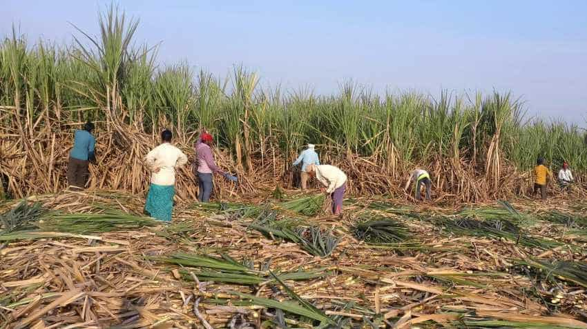 Contract farming may pave way for prosperity, enhance farmers' income