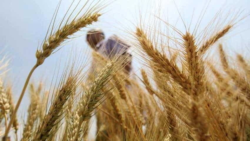 Punjab government seeks hike in MSP of rabi crops