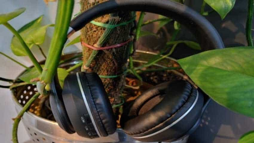 Ambrane WH83 wireless headphone review: Affordable, complete package for music lovers