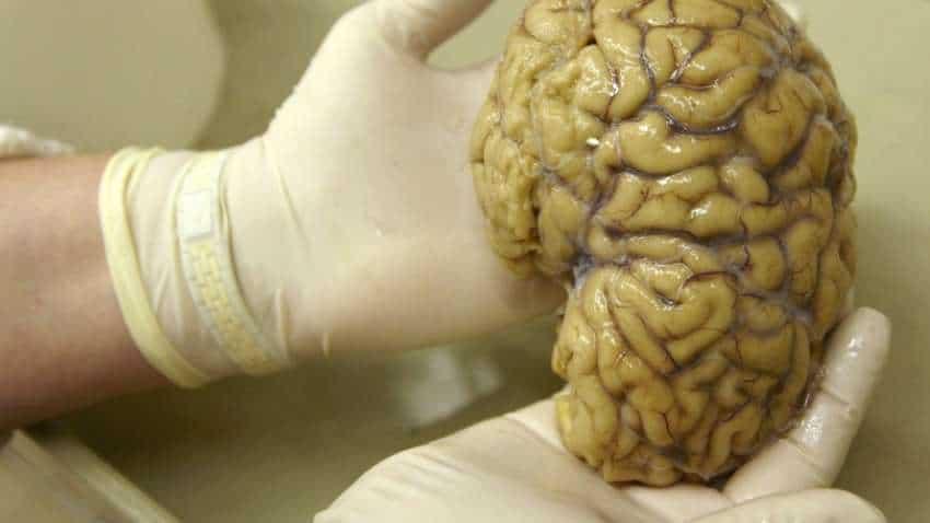 Continuous vigilance may form memories via different brain process: Study