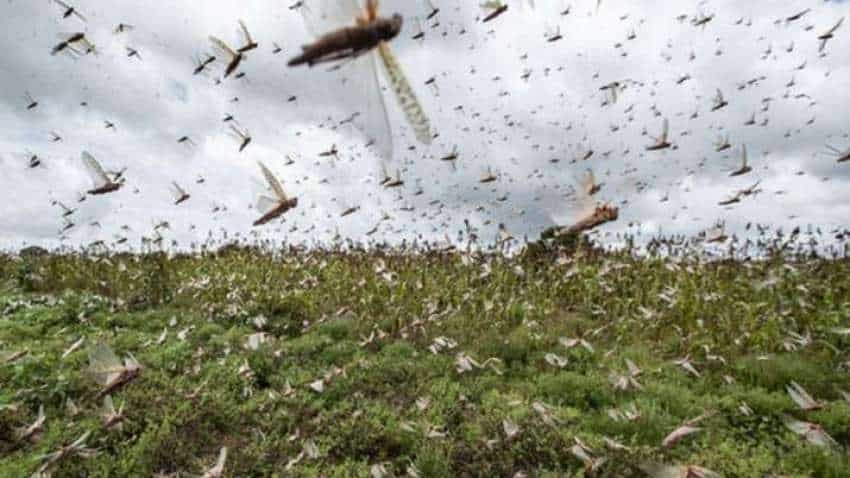 Now, drones and planes to fight locust menace in Rajasthan